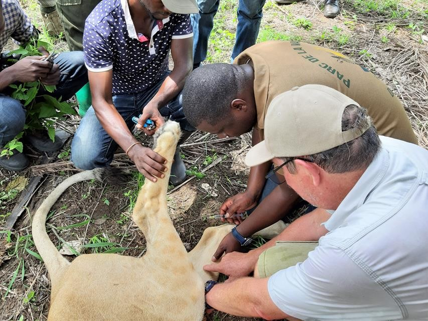 Training DRC_Showing veins_Wildlife Vets Namibia