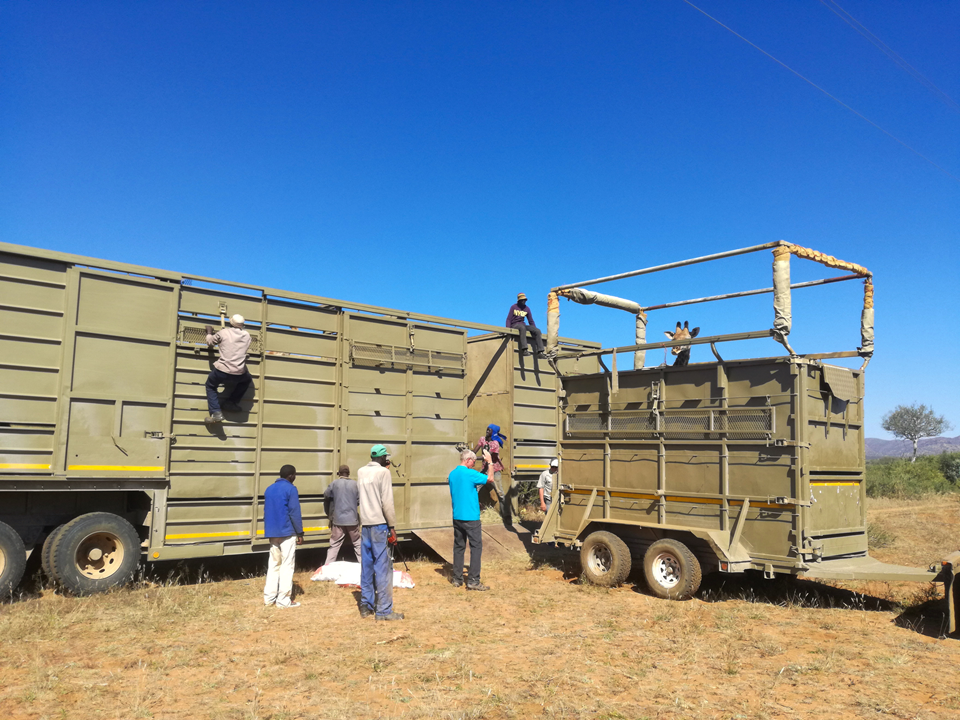 Trucks and trailers_Wildlife Vets Namibia